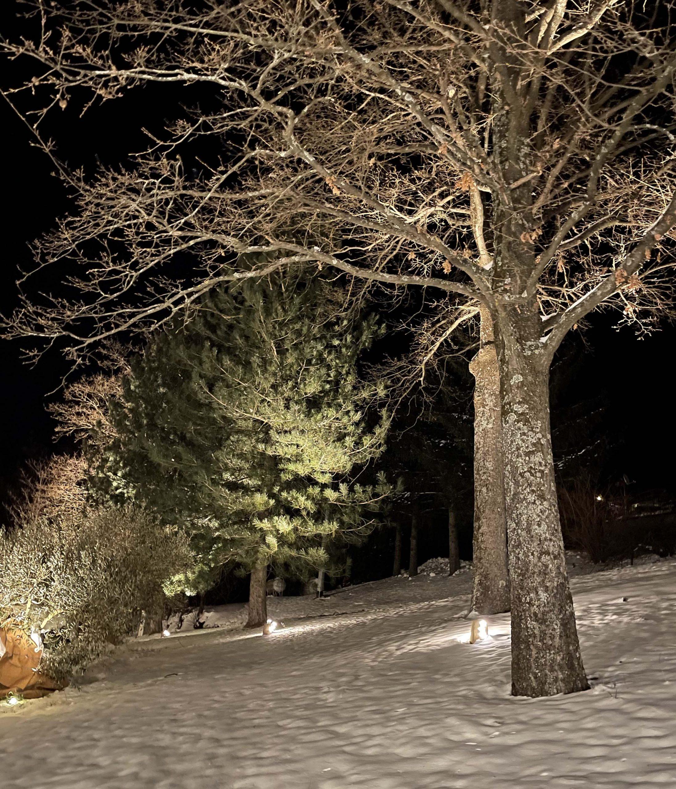 Illuminazione Alberi Parco Esterno
